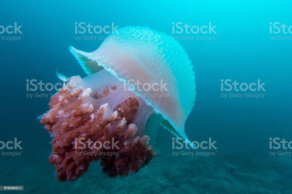 Jelly fish under the deep royalty-free stock photo
