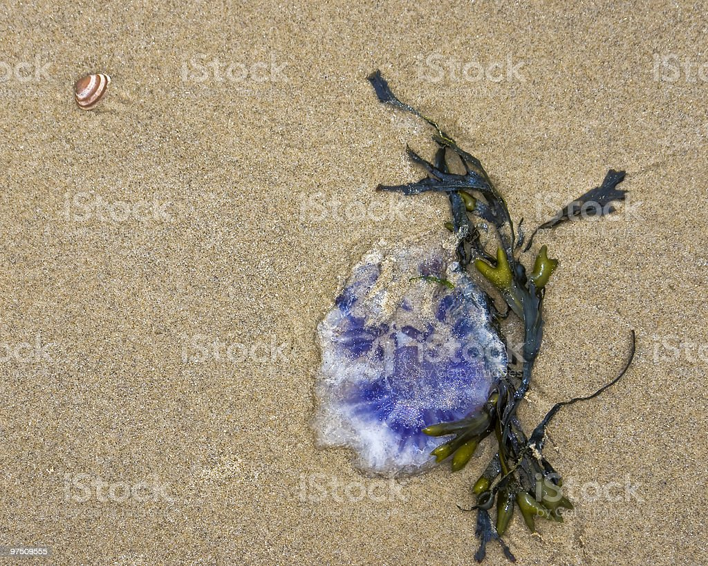 Jellyfish and seaweed royalty-free stock photo