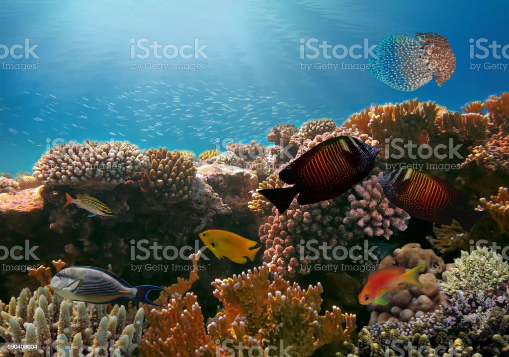 Jellyfish and Tropical fish in the Red Sea stock photo