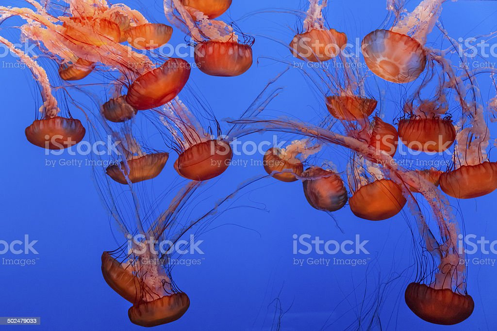 Jellyfish background stock photo