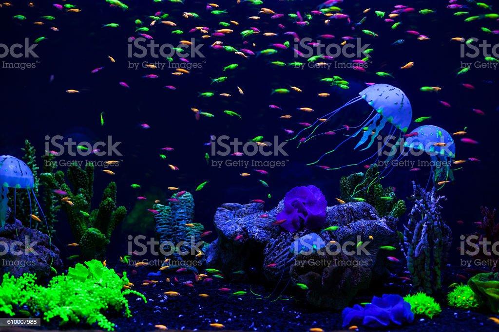 Jellyfish, corals and fish. stock photo