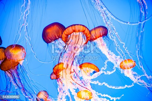 Jellyfish floating in water, vibrant orange, pink and blue colors.