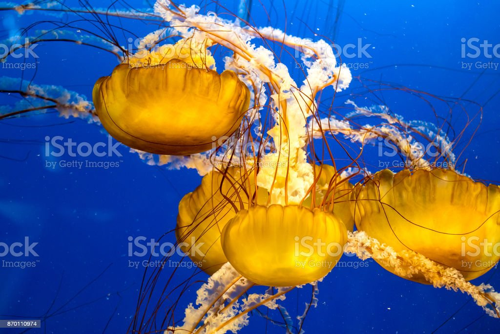 Jellyfish Floating in Water stock photo
