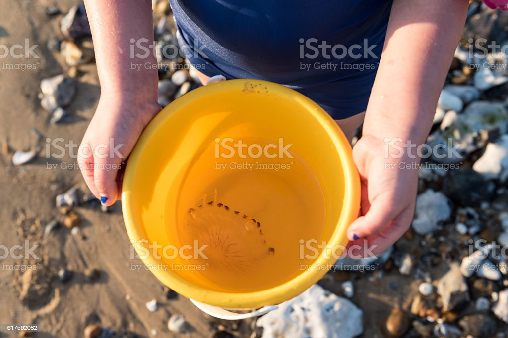 Jellyfish in a bucket stock photo