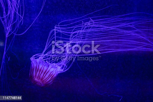 Jellyfish in an aquarium