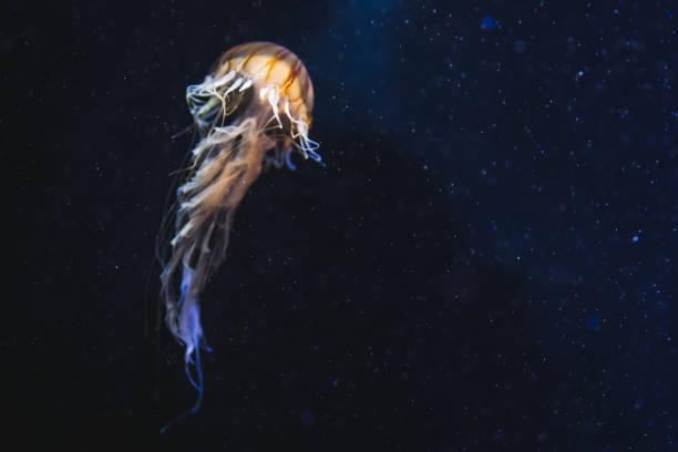 깊은 우주에는 해파리 - 깊은 뉴스 사진 이미지