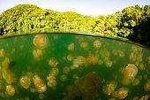 A Lake in Palau