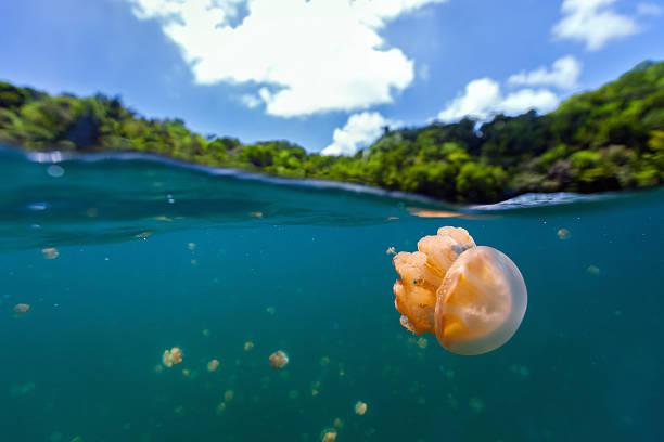 Jellyfish Lake stock photo