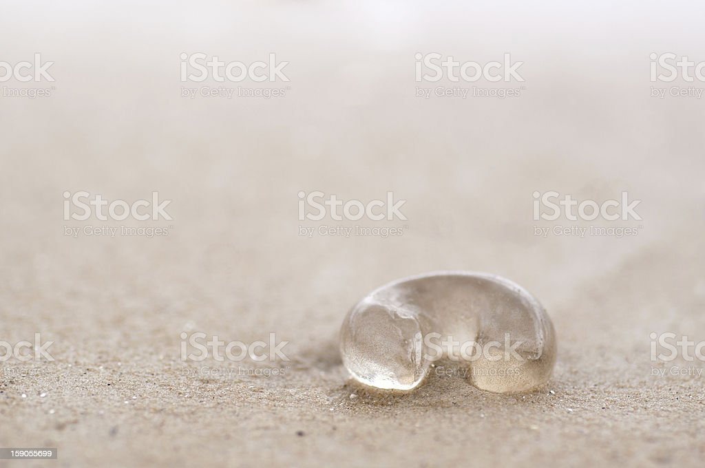 Jellyfish on beach royalty-free stock photo