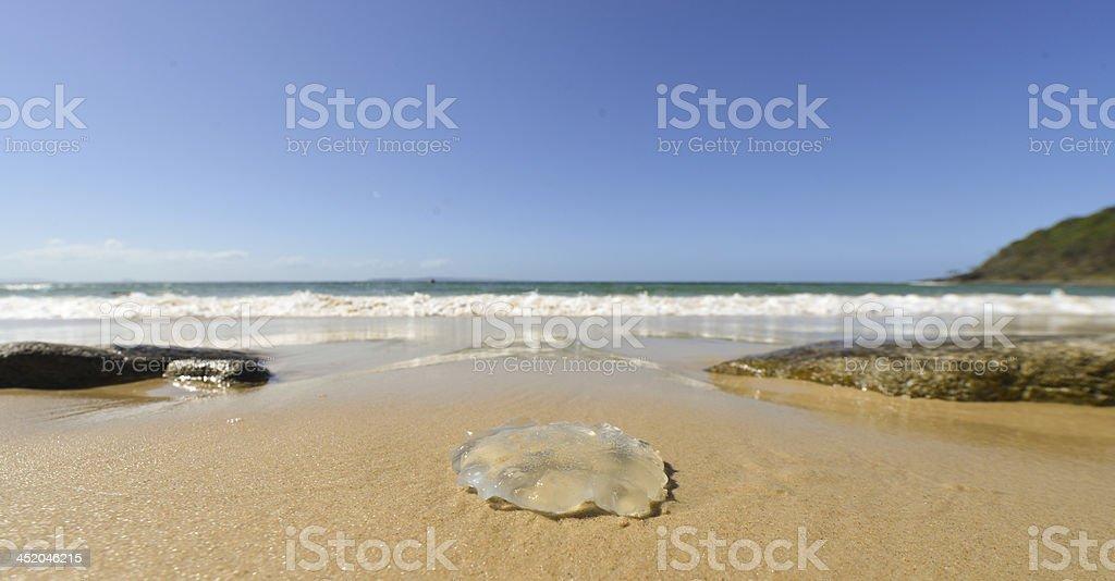 Qualle am Strand – Foto