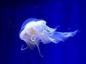 jellyfish inside aquariums