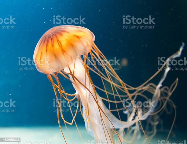 Jellyfish Stock Photo - Download Image Now