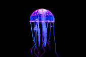 Jellyfish is a kind of Marine life, very beautiful
