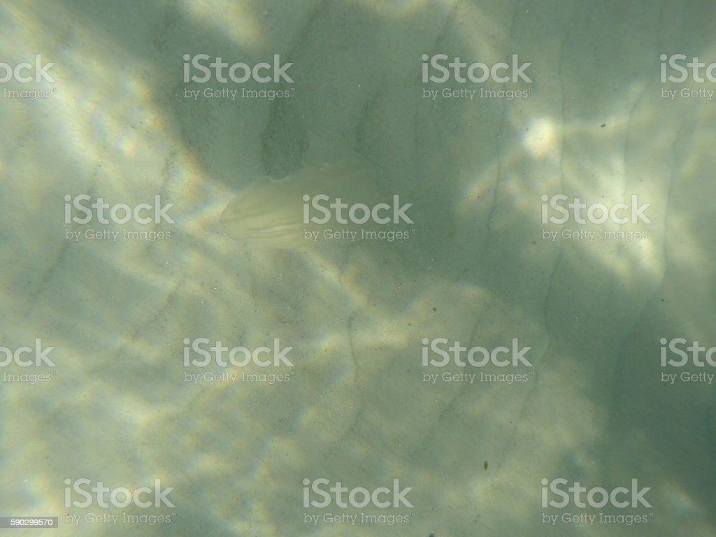 Jellyfish royaltyfri bildbanksbilder
