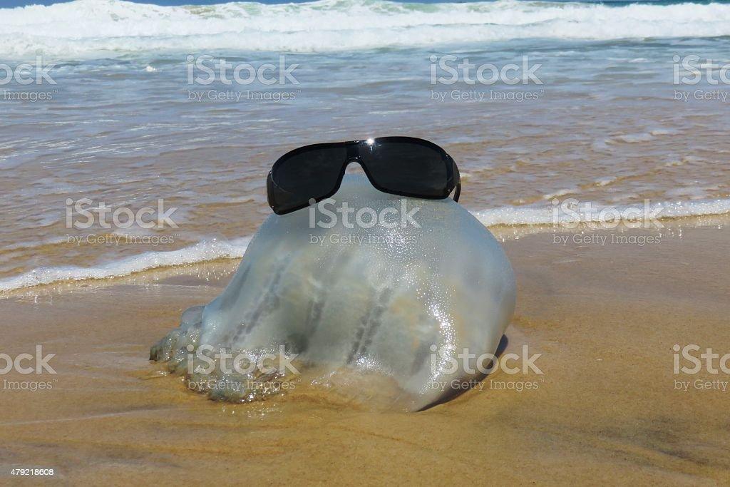 Jellyfish sunbathing stock photo