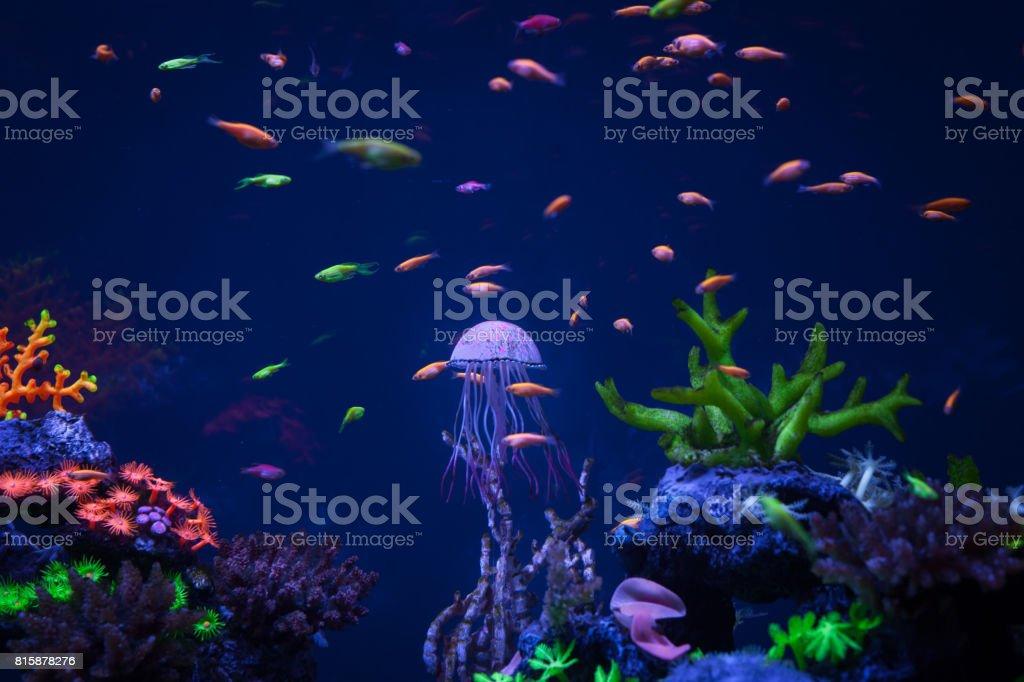 Jellyfish swims under water stock photo