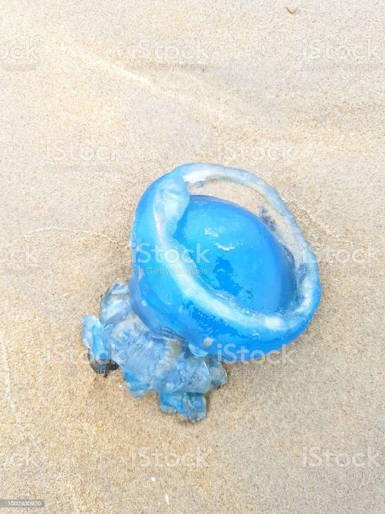 Quallen am Strand angeschwemmt – Foto