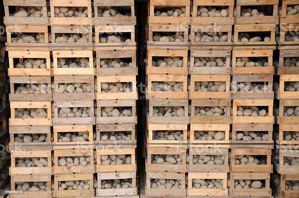 Jersey Royal potato flukes. stock photo