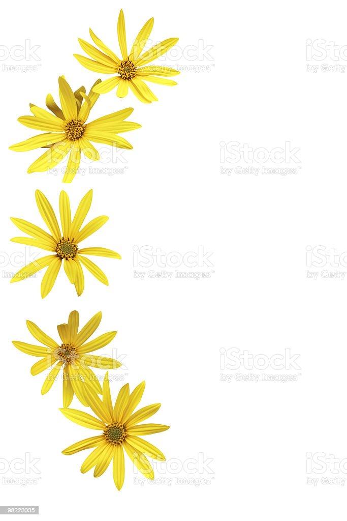 Jerusalem artichoke flowers royalty-free stock photo