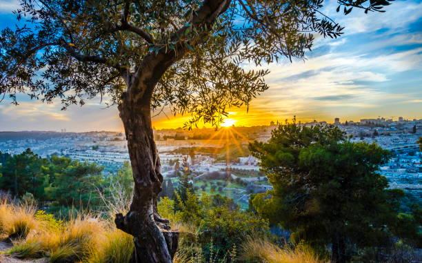 jerusalem at sunset - иерусалим стоковые фото и изображения