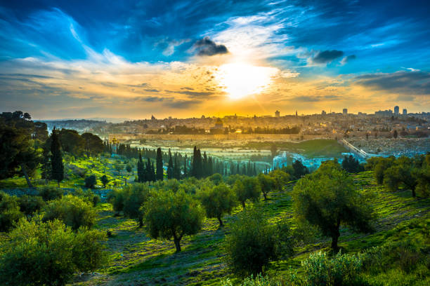 Jerusalem Sunset View of the Old City Jerusalem from the Mount of Olives with olive trees in the foreground dome of the rock stock pictures, royalty-free photos & images