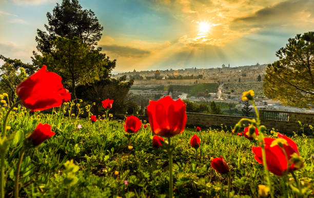 Jerusalem with red flowers View of Jerusalem with calanit - red poppy flowers, national flower of Israel east jerusalem stock pictures, royalty-free photos & images