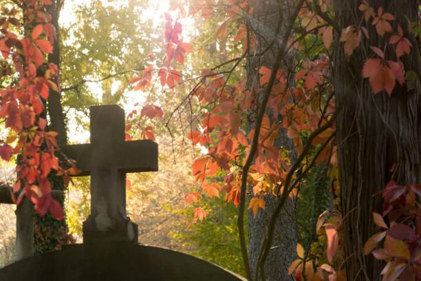 lychakiv autumn cemetery - waldfriedhof stock-fotos und bilder