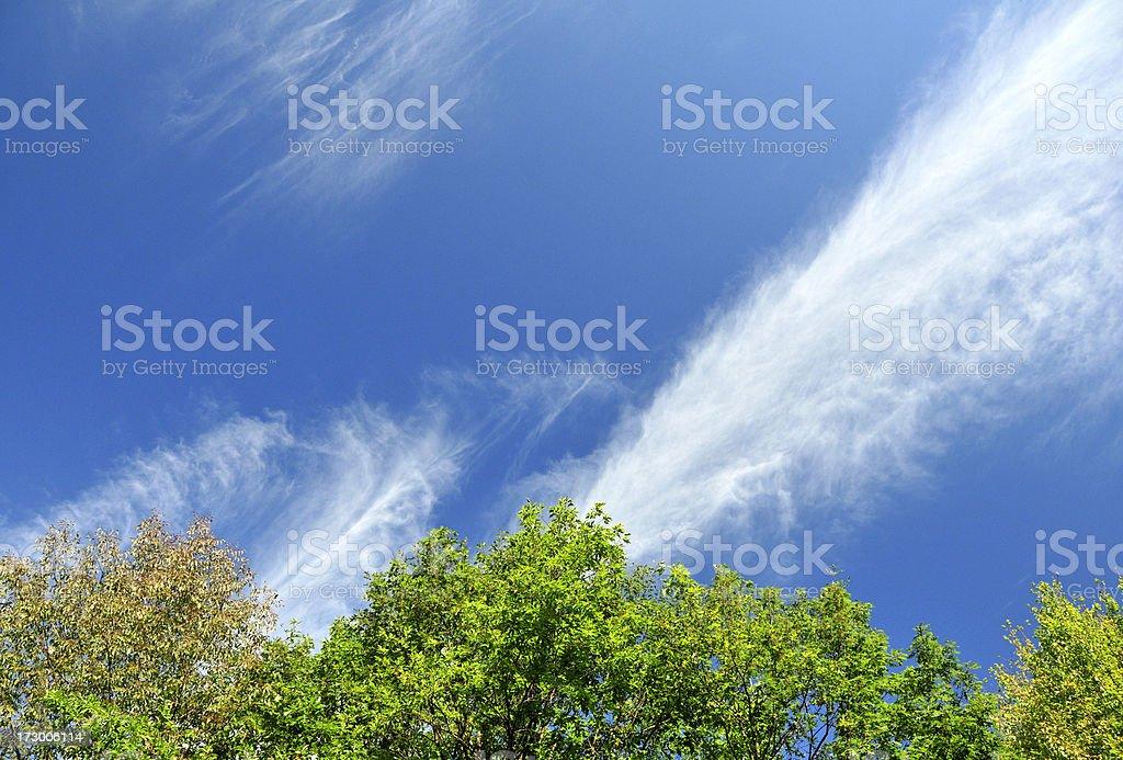 Jet Stream Over Trees stock photo