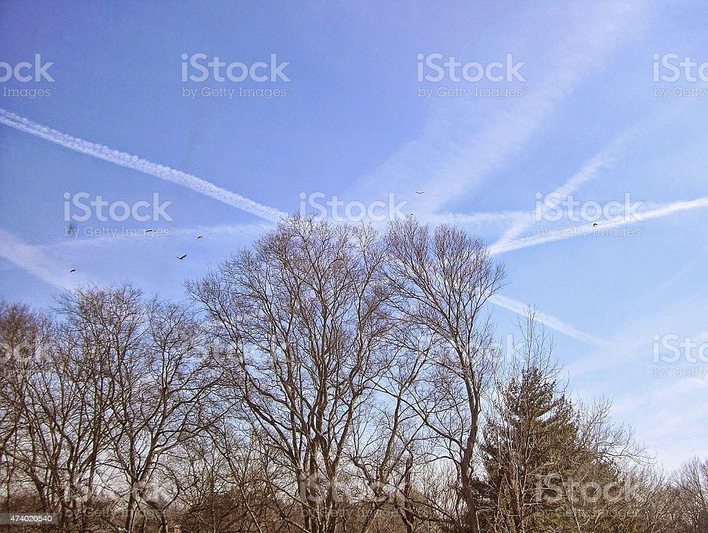 Jet Vapor Trails Crisscross in a Blue Sky in Winter stock photo