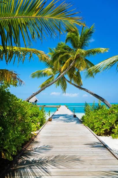 steg auf den malediven herathera island, addu atoll, malediven - idylle stock-fotos und bilder