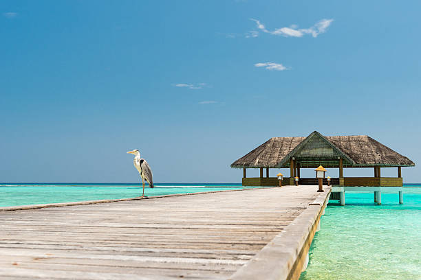 jetty over the indian ocean stock photo