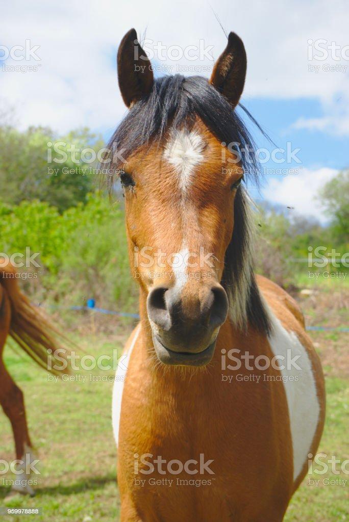 jeune cheval à crinière noire stock photo