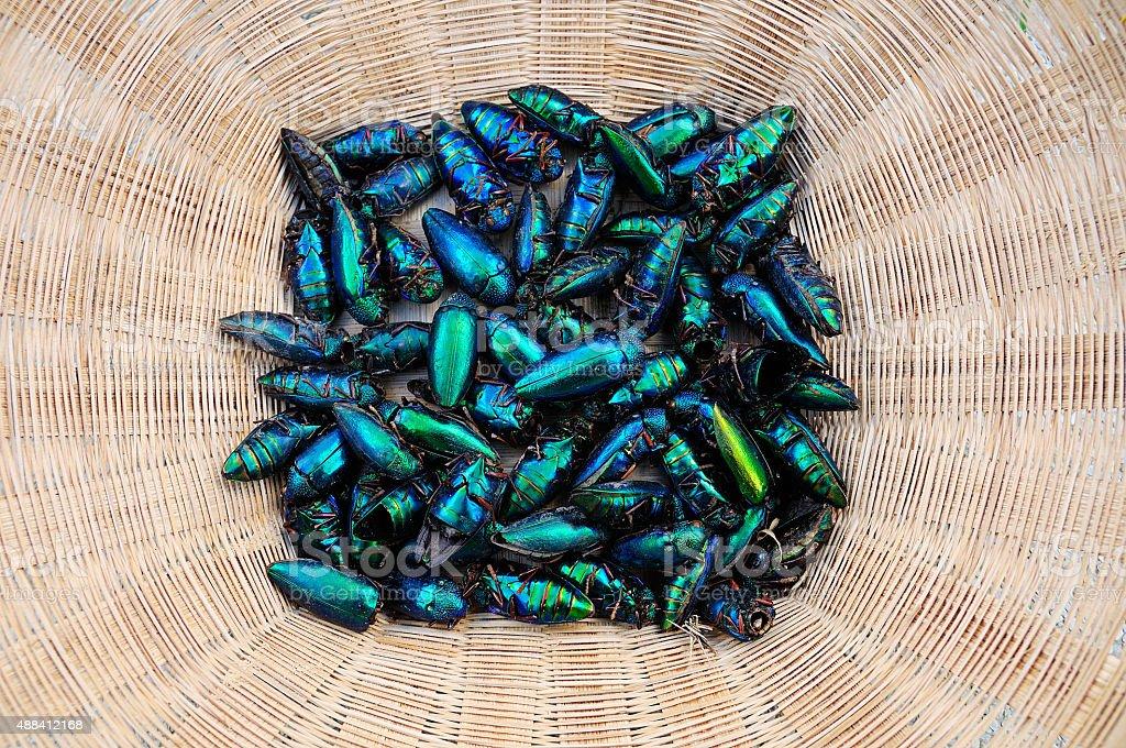 Jewel beetle, Metallic wood-boring beetle. stock photo