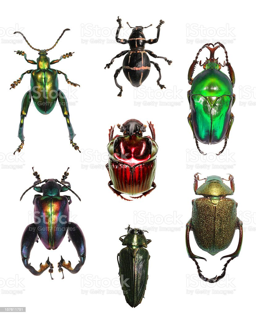 Jewell beetle collection on white XXXL royalty-free stock photo