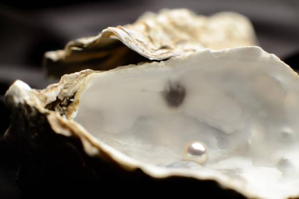 jewelry, pearl in an oyster - mięczak zdjęcia i obrazy z banku zdjęć