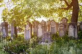 Jewish cemetery, graves near a tree