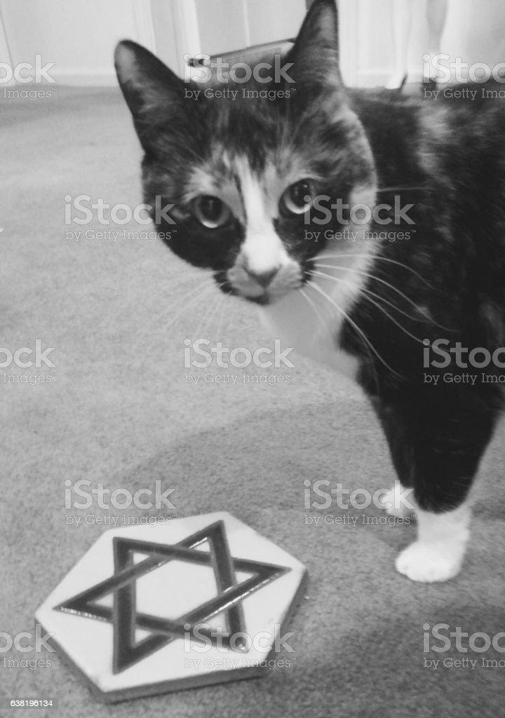 Jewish Kitty stock photo