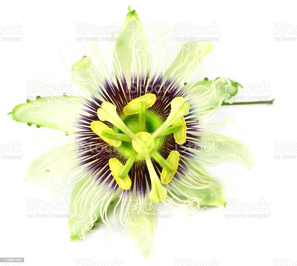 Jhumko Lata or Passion flower stock photo