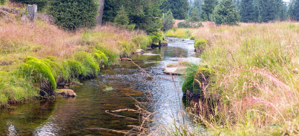 Jizerka river - Jizerky bog, Czech republic stock photo