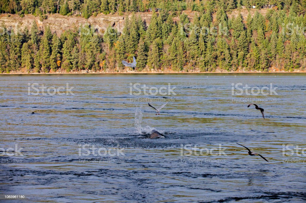 Joan Point Park Stock Photo - Download Image Now - iStock