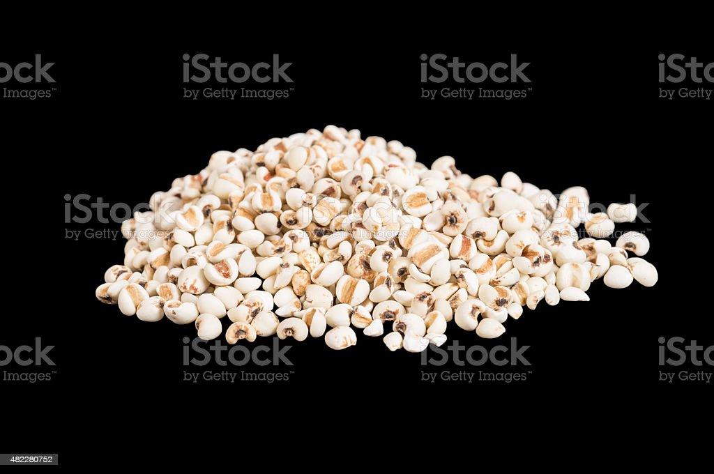 job's tears seed stock photo