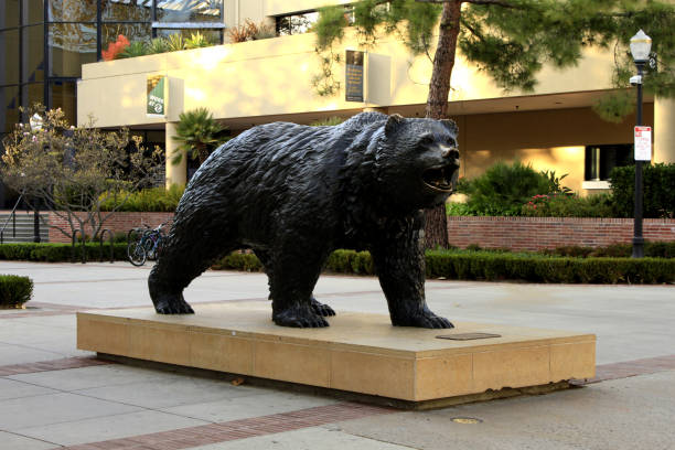 Joe Bruin: official mascot of UCLA - University of California, Los Angeles Los Angeles, United States - December 23, 2011: Joe Bruin: official mascot of UCLA - University of California, Los Angeles ucla medical center stock pictures, royalty-free photos & images