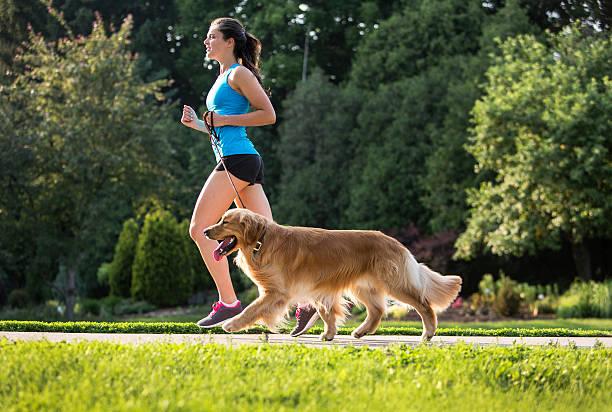 Jogger and golden retriever running on a paved trail picture id484491484?b=1&k=6&m=484491484&s=612x612&w=0&h=0spxmasqrhx6w aqbuwynjahisvo1qvqotbw0nq2wwc=