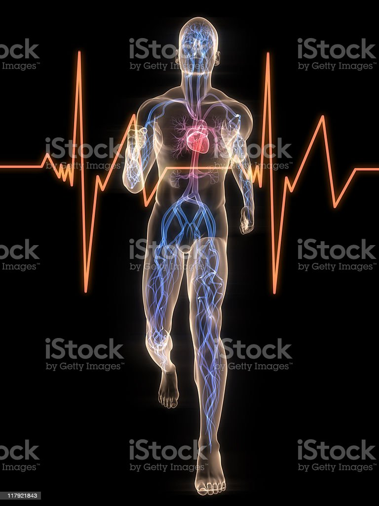 jogger - vascular system royalty-free stock photo