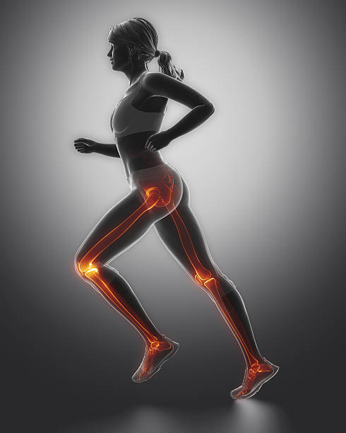 Jogging woman legs anatomy stock photo