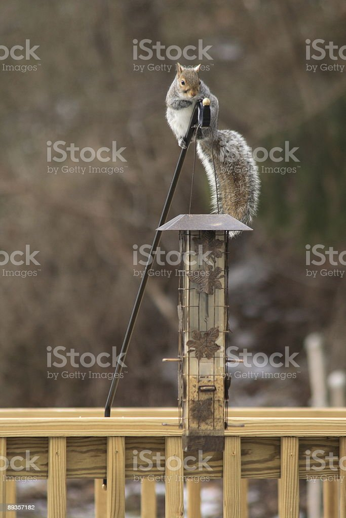 Join the Circus royalty free stockfoto