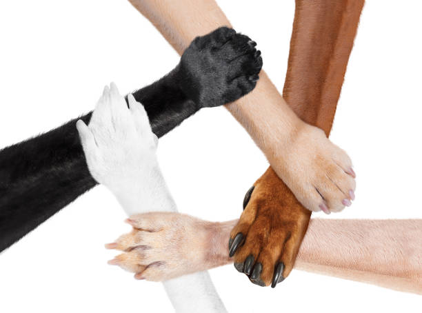 joined paws hands in a circle as a team stock photo