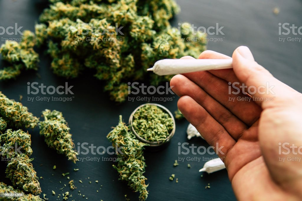 joint in hand of marijuana in hand with trichomes and crushed weed in a - Royalty-free Agriculture Stock Photo