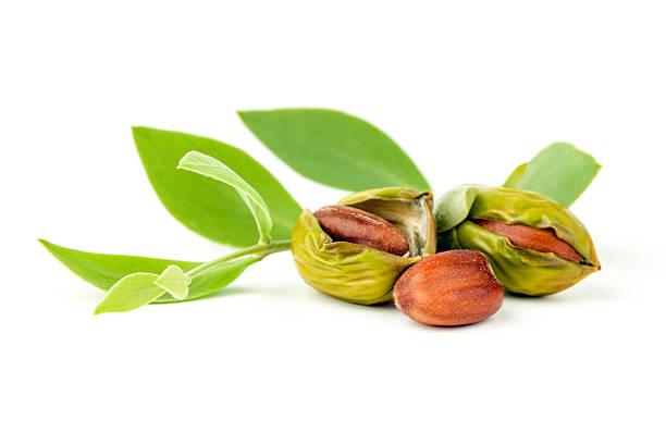 jojoba - wachsblume stock-fotos und bilder