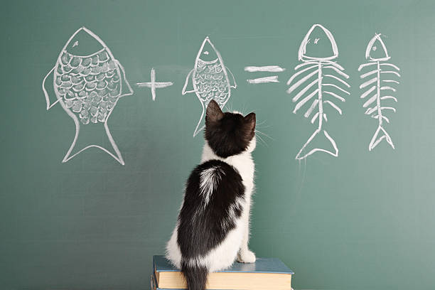 Joke Joke about a cat studying arithmetic undomesticated cat stock pictures, royalty-free photos & images